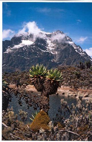 Rwenzori (foto greenreport.it)