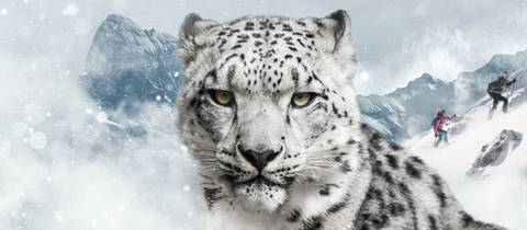 Snow Leopard Day 2018